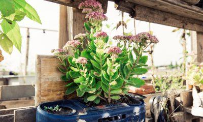 Pflanze wächst aus einem alten Radio