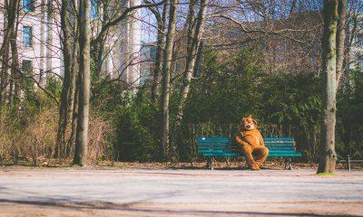 Berliner Bär sitzt auf einer Bank im Park