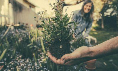 Eine Blume wird eingepflanzt