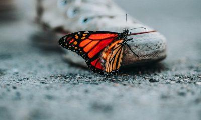 Schmetterling sitzt auf Schuh