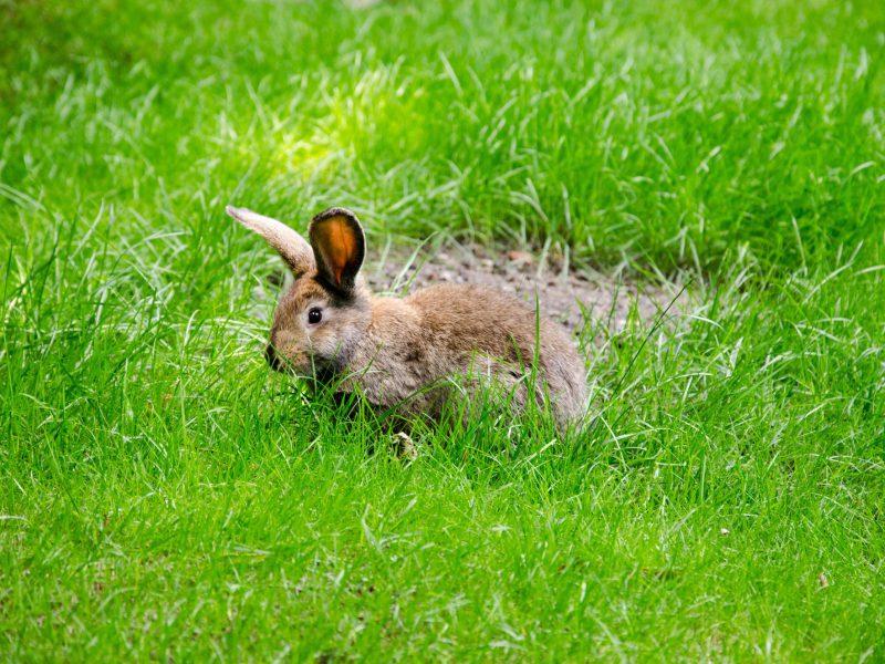 Kaninchen sitzt auf einer Wiese