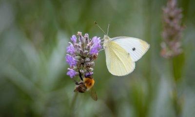 Im Bild ist eine Blüte mit einem Schmetterling zu sehen.