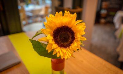 Auf dem Bild ist eine Sonnenblume zu sehen.