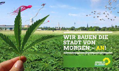Es ist ein Cannabis-Feld auf dem Tempelhofer Feld zu sehen