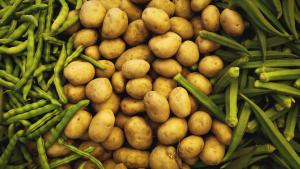 Auf dem Bild sind Bohnen und Kartoffeln zu sehen, Zutaten für einen Kartoffelsalat.