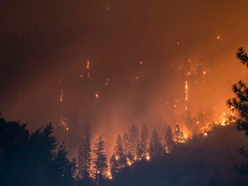 Auf dem Bild ist ein brennender Wald zu sehen.