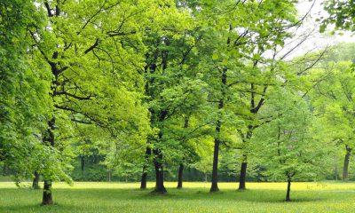 Ein grün blühender Wald im Sommer ist zu sehen