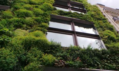 Auf dem Bild sieht man eine mit Pflanzen bewachsene Hauswand.
