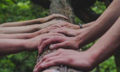Hände auf einem Baum