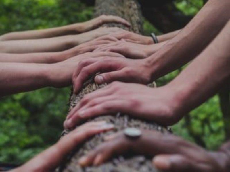 Hände auf einem BaumstammAuf dem Foto sehen wir
